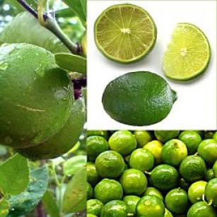 Owoce Lima