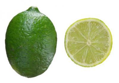 Citrus aurantifolia Mexican Lime