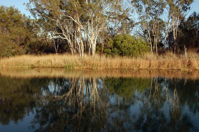 Reflections along the banks of the River Murray above Lock 1 at Murbko, SA.