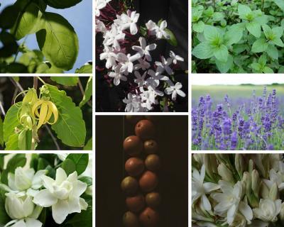 Botanical scents for summer