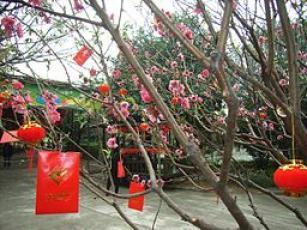 PanYu Clifford Farm Tree Lai See