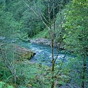 Mountain river flowing through young green forest