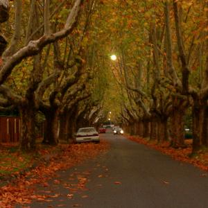 Victoria Avenue, a notable street in the Melbourne suburb of Canterbury